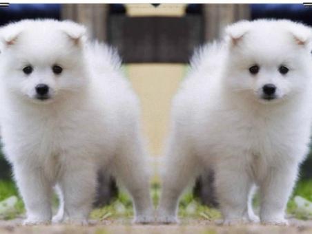Породы собак с фотографиями и названиями Топ 80 пород собак