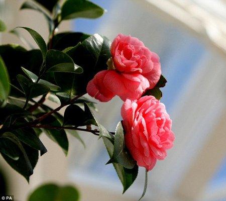 Редкий и самый красивый цветок