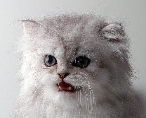 Кошки – одкошки – одни из самых